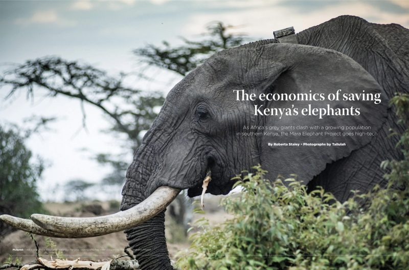 Corporate Knights: The Cost of Saving an Elephant