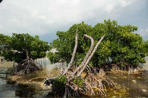 TallulahPhoto-BelizeCayeCaulker-5894.jpg